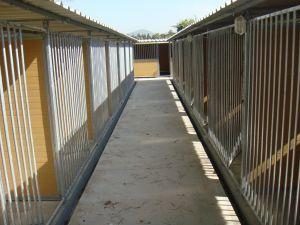 roa arquitectura y sostenibilidad protectora animales 01 sabadell